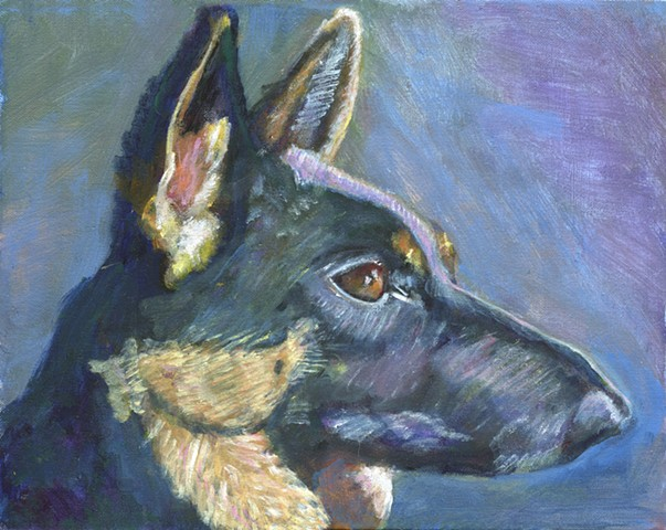 German Shepherd with a blue background