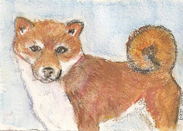 Watercolor pencil on paper depicting a shibu inu