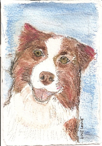 Watercolor pencil on paper depicting a red Australian Shepherd