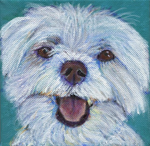 Acrylic custom painting of a maltese