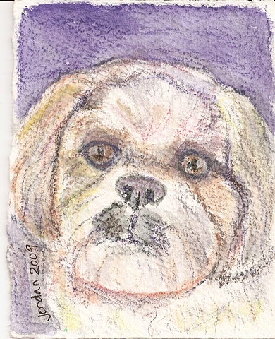 Watercolor pencil on paper depicting a Lhaso Apso