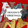 Greyhounds say Seasons Greetings
