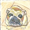 Bulldog on beige tile