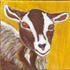 Sweetie Goat