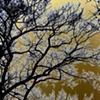solarized trees