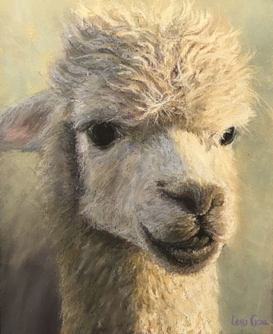 Afternoon Alpaca