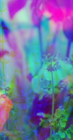 "Purple Irises :: From the Video and Still Image series ""Temporal Shifts"" 2011-2016"