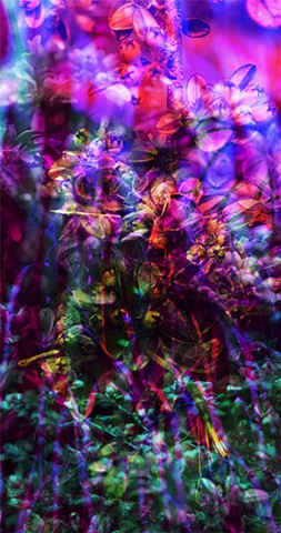 "Wall Plants Vertical Triptych :: From the Video and Still Image Series ""Temporal Shifts"" 2011-2016"