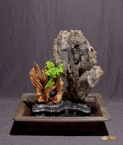 feather rock gongshi fountain with Malaysian driftwood, maidenhair fern, and Corian daiza