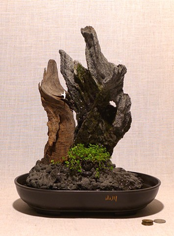 Malaysian driftwood and feather rock fountain with baby's tears and miniature white terns