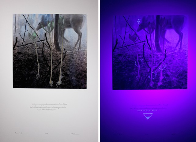 The right hand image is a detail under UV light.