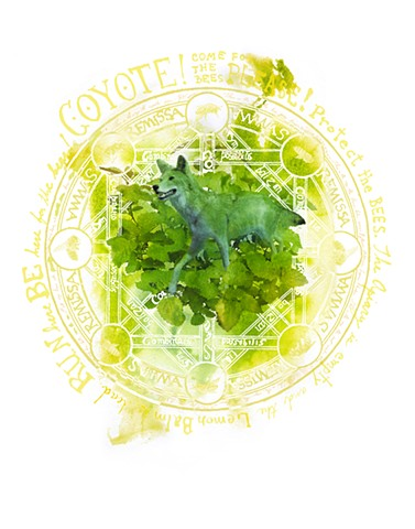 Coyote and Lemon Balm