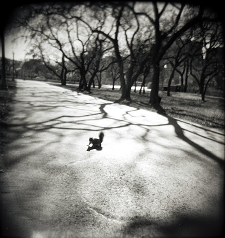 Holga camera image of a squirrel on a path with trees and their shadows on either side in Grant Park by lucy mueller