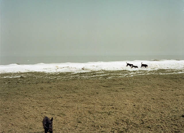 Dog beach at Montrose harbor in winter with black dogs running free photographed by Lucy Mueller