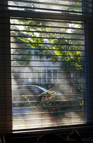 Summer haze with flowers and street scene as seen through a house's  front window photographed by Lucy mueller
