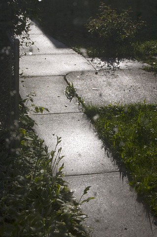 A concrete walkway shining after a summer's rain photographed by lucy mueller