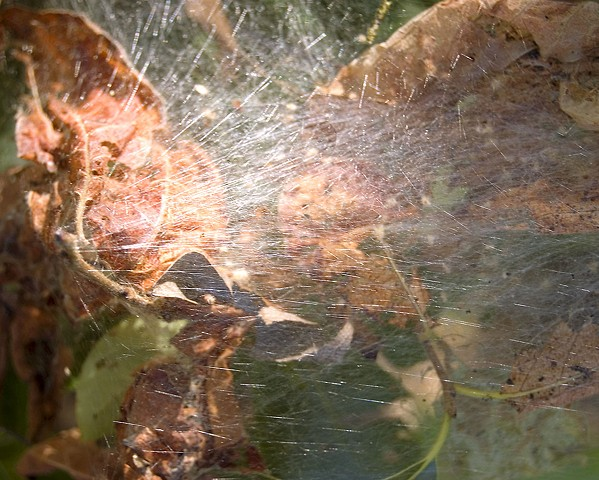 Insect built web with sun shining through by Lucy Mueller