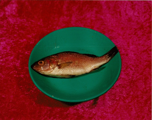 """Sense of Herself"" (Fish) 1 out of over 750 different images 1995-present"