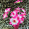 Can You Dig It? A Chromatic Series of Floral Arrangements (Pink)