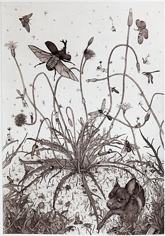 Murnong yam daisy Etching and aquatint