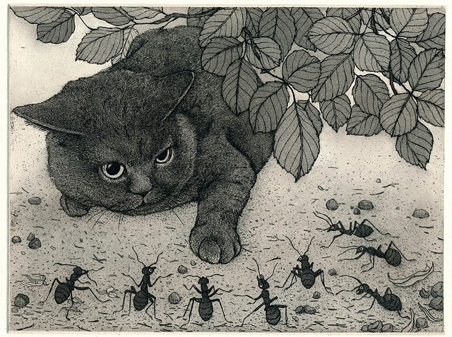 Etching and aquatint cat