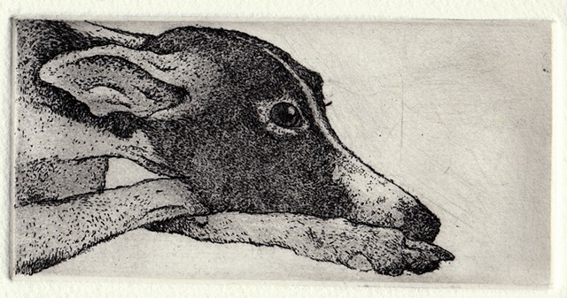 Whippet etching and aquatint