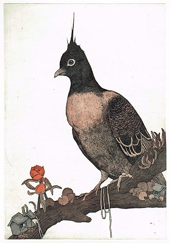 Etching and aquatint, animal, bird, pigeon