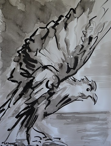 Natural History Museum Dublin No. 1, bird, indian ink, david murphy
