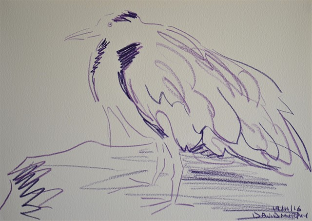 Bird No. 2, drawing, indian ink, David Murphy, Ireland, Irish, dublin