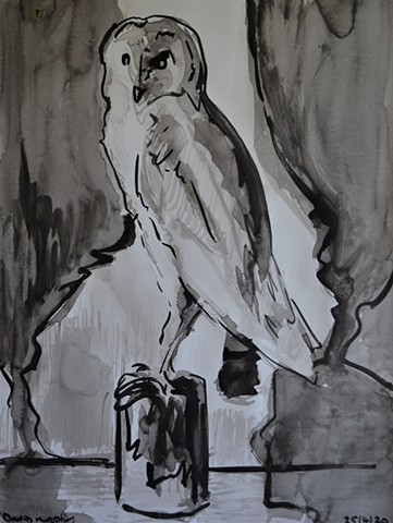 Natural History Museum Dublin No. 2, owl, bird, david murphy, indian ink,