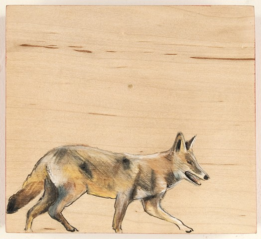 Coyote View 2
