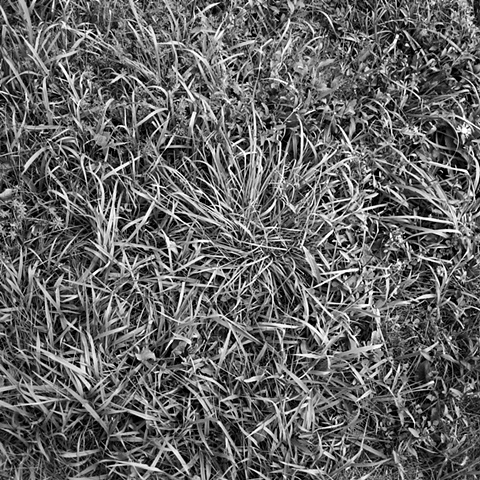 Grass at Storm King Sculpture Park, NY. / Austin Sidewalks