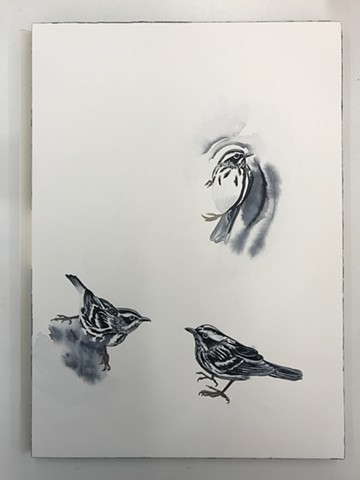 Process picture of my Black and White Warbler painting during my Penland School of Craft Winter Residency 2019