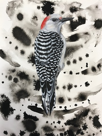 Process picture of my Red-Bellied Woodpecker painting during my Penland School of Craft Winter Residency 2019