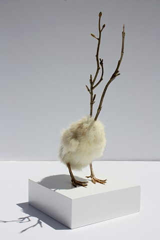 Sculpture of Taxidermy Karley Feaver by Karley Feaver