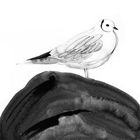 King of Birds - Ross's gull