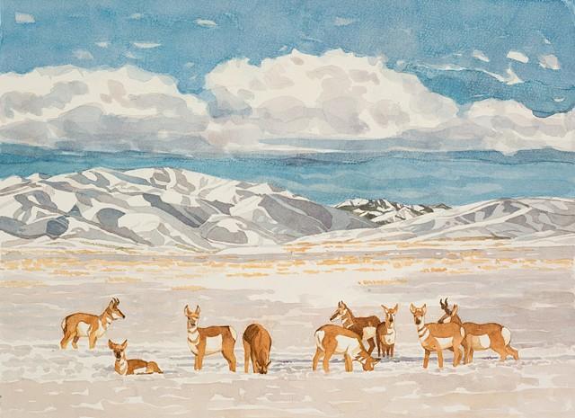 Pronghorn Antelope in Fairfield, Idaho