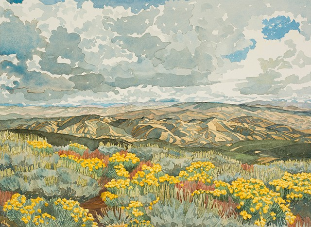 Idaho Landscapes By Sandra Shaw Wildflowers On Mores