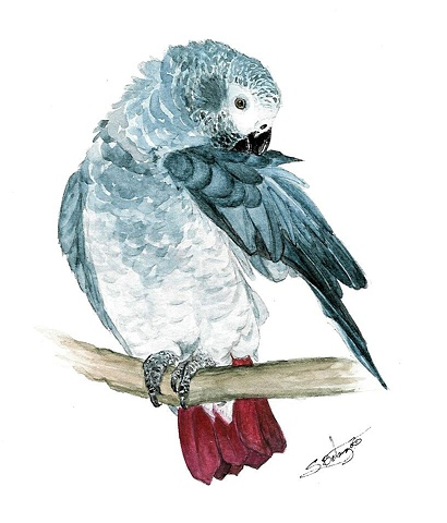 African grey parrot print, african grey parrot art, sue betanzos, african grey parrot painting, parrot painting, bird painting, pet portrait painting, bird watercolor painting, gouache, african bird painting