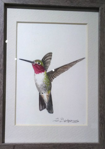 Hummingbirds, sue betanzos, birds, hummingbird art, hummingbird painting, animal art, bird art, tucson wildlife