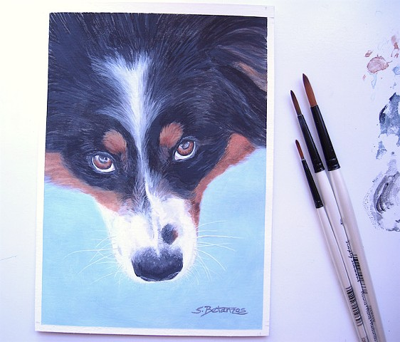 Australian Shepherd, Australian Shepherd rescue, dog painting, Sue Betanzos, miniature painting, acrylic, Canson paper, watercolor paper, Australian shepherd painting, pet portrait painting, dog painting, contemporary dog painting, herding dog painting, p