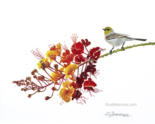 Little Visitor, Sue Betanzos Art, reverse glass painting, glass painting, art glass, glass art, Sue Betanzos, wildlife art, songbirds, Verdin, back painted glass, glass painting, birds, bird art, animal art, nature art