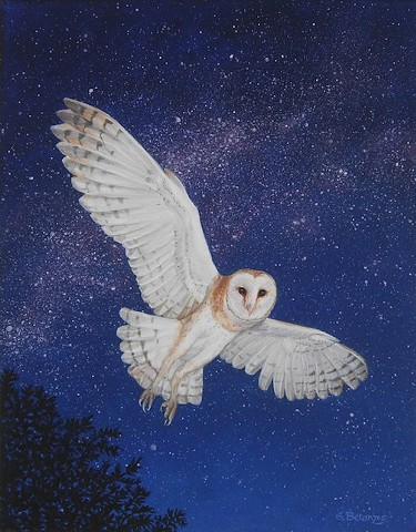 starry night, barn owl, raptors, owls, owl art, owl print, barn owl art, barn owl print, sue betanzos