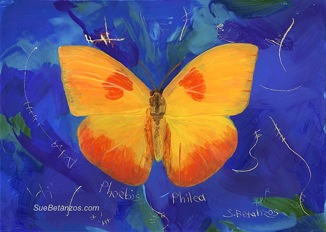 butterflies, Sue Betanzos, animal artist, reverse glass painting, back painted glass, glass painting, orange butterfly, Tucson wildlife, miniature glass painting, nature, Sue Betanzos, nature artist,