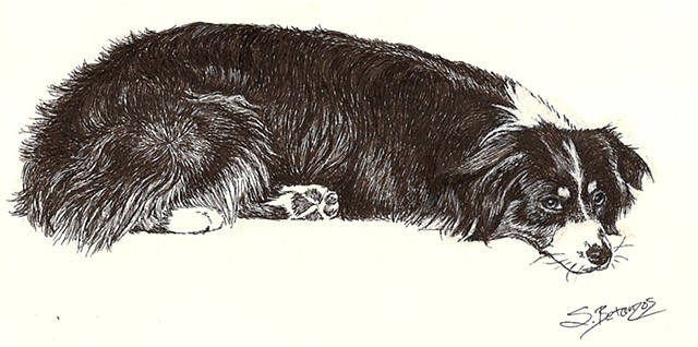 dog, pet, pet portrait, australian shepherd, ink, drawing, fine art