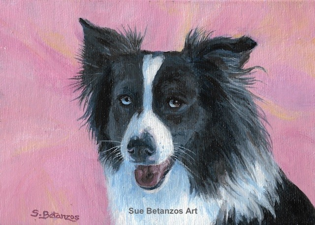 Border Collie, Border Collie rescue, Border Collie art, Sue Betanzos, pet portrait, dog portrait,