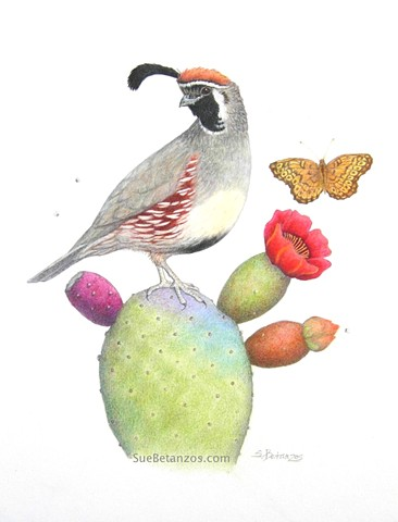 Quail Whimsey, Sue Betanzos Art, colored pencil bird, Bird art, colored pencil quail, Sue Betanzos, nature decor, nature art, nature wall art, quail art, bird art, prickly pear cactus art, gambels quail art, desert quail, southwest quail, arizona quail, s