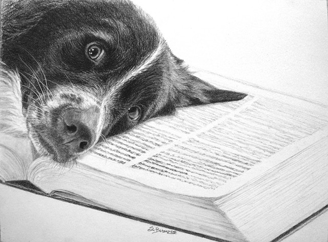 Australian Shepherd Pencil Portrait, pet portrait, book art, Australian Shepherd, Australian Shepherd rescue, dog drawing, Sue Betanzos, Australian shepherd painting, pet portrait painting, dog painting, contemporary dog painting, herding dog painting, pe