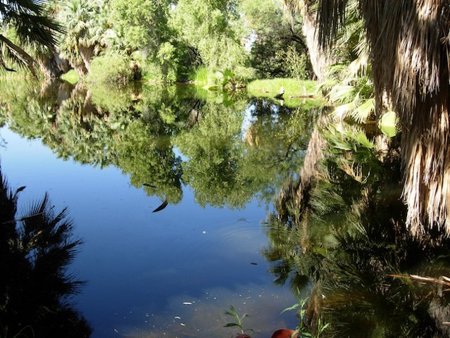 Reflections of Nature Art Exhibit, Agua Caliente Park