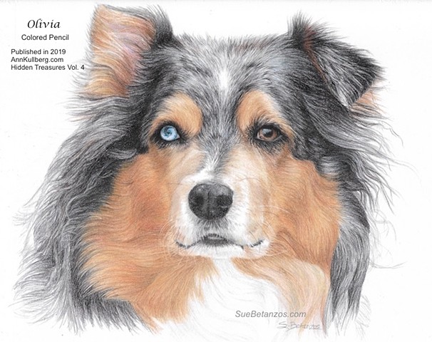 Australian Shepherd, Australian Shepherd rescue, dog drawing, Sue Betanzos, Australian shepherd painting, pet portrait painting, dog painting, contemporary dog painting, herding dog painting, pet memorial painting,